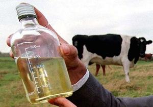 bensin dari urin